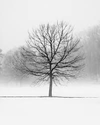 winter tree landscape photography peaceful nordic black and
