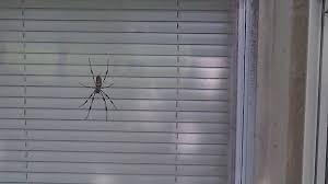 Misunderstood Spider Meme 16 Pics - misunderstood spider imgur