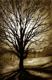 the tree of by anthonypresley on deviantart