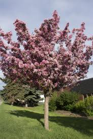 apple blossom tree amazing deal on pink faux apple blossom
