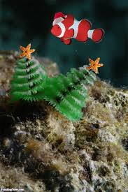 christmas tree worms pictures freaking news