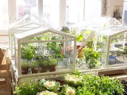 Garden Greenhouse Ideas Easy Diy Mini Greenhouse Ideas Creative Greenhouses