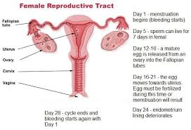 Light Bleeding Before Period Does Implantation Bleeding Happen At The Same Time Around Periods