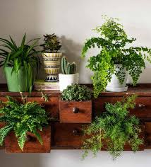 How To Decorate Interior Of Home How To Decorate With Plants Latest Homegoods Project Plants