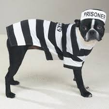 Prisoners Halloween Costumes Prison Pooch Pet Dog Halloween Costumes Perfect