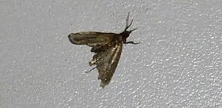 Small Flying Insects In Kitchen