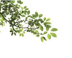 png pesquisa graphic plants photoshop