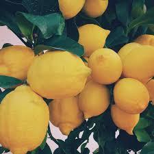 lemon oil tips and tricks u2013 the rmo blog