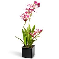 Orchid Cut Flowers - national tree co orchid flowers in pot u0026 reviews wayfair