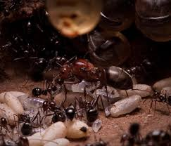 Bed Bugs New York City Ants Bed Bugs Events Mice Rats Roaches Termites Bed Bug