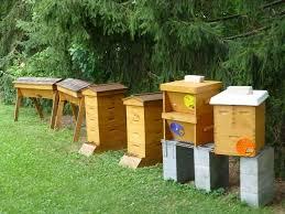 Backyard Beehive Backyard Beekeeping In The Veggie Gardening Tips Apiary U2014 Veggie