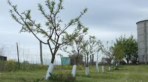 tips to establish a backyard fruit tree orchard ohio farm bureau
