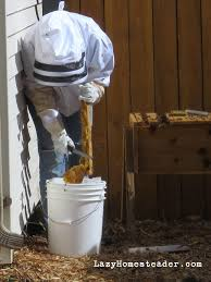Harvesting Honey From A Top Bar Hive First Harvest The Lazy Homesteader