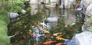 Backyard Fish Pond Ideas Backyard Koi Pond Designs Sweeney Feeders