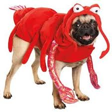 Cute Small Dog Halloween Costumes 26 Dog Costumes Images Animals Puppies