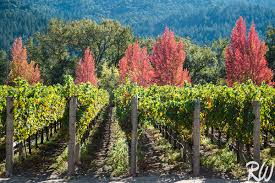 calistoga fall color field photo blog richard wong