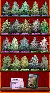 cannabis im garten marijuana seeds canada buy cannabis seeds for sale crop king