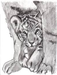 tiger cub by worthgold on deviantart