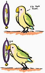 Parrot Meme - top 5 parrot memes skycade