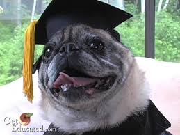 dog graduation cap and gown the dog who earned an mba degree