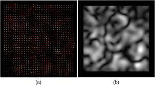 demons registration for u003ci u003ein vivo u003c i u003e and deformable laser