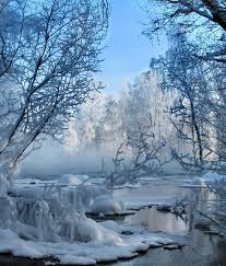 frosty trees in winter nature
