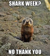 Shark Week Meme - shark week no thank you crying baby seal meme generator
