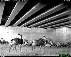 Stae Of Washington Stock Photos by Special I 90 Overpass To Give Animals Safe Passage The Seattle Times