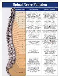 Nerve Map Photos Map Of Spinal Nerve Functions Human Anatomy Diagram