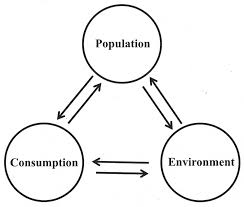 pervasive externalities at the population consumption and
