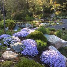 Backyard Landscaping Tips by 25 Best Septic Mound Landscaping Ideas On Pinterest Landscaping