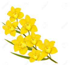 yellow flowers yellow flowers background vector royalty free cliparts