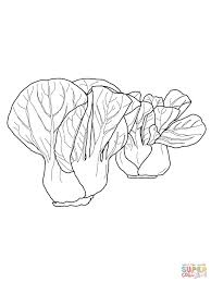 bok choy coloring page free printable coloring pages