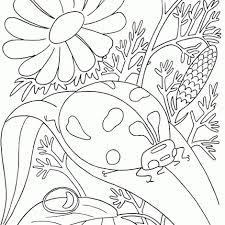 bugs coloring pages free printable bug coloring pages kids