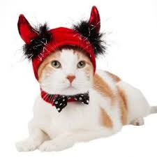 Cute Small Dog Halloween Costumes 85 Pet Costumes Patterns Ideas Images Pet