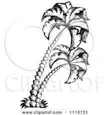 clipart black and white sketched palm trees royalty free vector