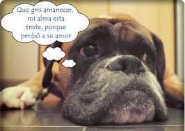imagenes chistosas y tiernas imágenes con frases divertidas sobre perros y gatos tiernas y chistosas