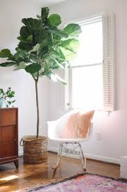 artificial plants the most convincing faux fiddle leaf tree out