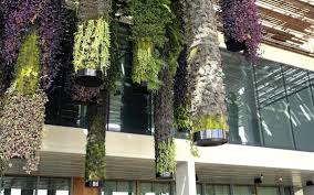 growing toward the sun vertical gardens miami herald
