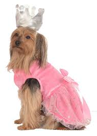 pets adorable last minute halloween costumes for small dogs and