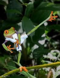 Karate Meme Generator - fightmaps caption contest winning caption by mike bryan mma meme