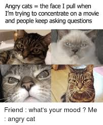 Meme Angry Cat - angry cats the face i pull when i m trying to concentrate on a