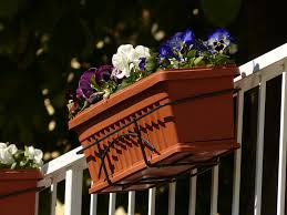 free photo balcony plants flower box pansy free image on