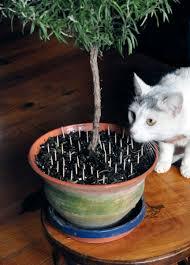 take care mixing cats houseplants the spokesman review