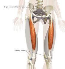 Human Anatomy Muscle 310 Best Human Anatomy Images On Pinterest Human Anatomy