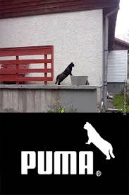 Puma Meme - puma memes best collection of funny puma pictures