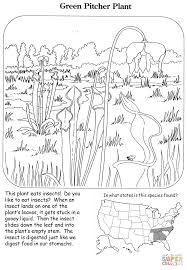 green pitcher plant coloring page free printable coloring pages
