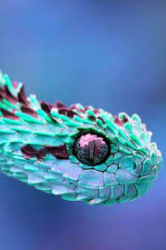 25 colorful snakes ideas snakes beautiful