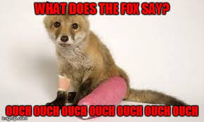 What Did The Fox Say Meme - what does the injured fox say imgflip