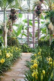 Chicago Botanic Garden Membership To The Chicago Botanic Garden Orchid Show